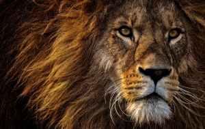 Feel Our Roar